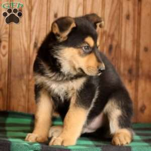 Wish Bone, German Shepherd Puppy