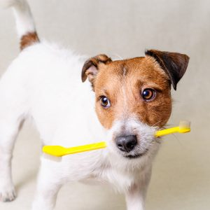 brush your dog's teeth - dog holding toothbrush in its mouth
