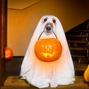 halloween costumes for dogs - dog in ghost costume
