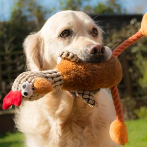 thanksgiving recipes - dog with turkey toy