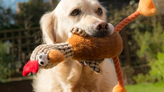 6 Thanksgiving Recipes for Your Dog