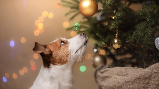 Holiday Dog Hazards: How to Keep Your Dog Safe