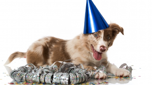 New Year's Resolutions to Make with Your Dog