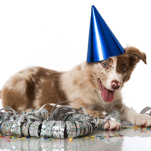 new year's resolutions - puppy with party hat