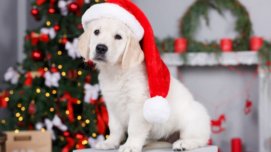 What to Consider Before Getting Someone a Puppy for Christmas