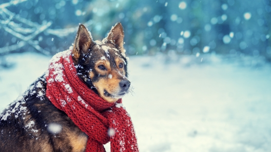 4 Tips to Help Keep Your Dog Comfortable in the Snow