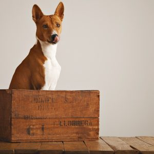 crate training - dog sitting in wooden crate