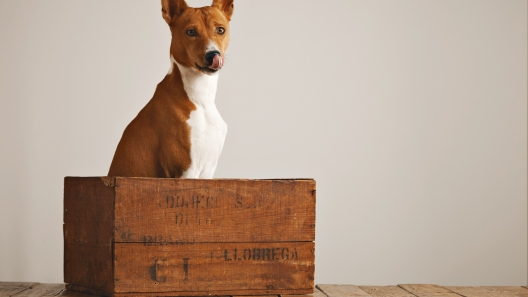 Introduction to Crate Training Your Dog