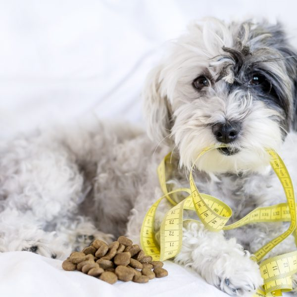 help overweight dogs get healthy - small dog with measuring tape and small pile of kibble