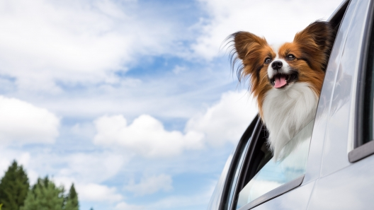 New Jersey Dog-Friendly Travel Guide