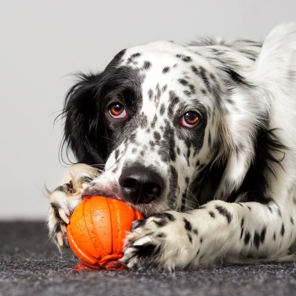 popular dog gadgets - dog chewing on ball