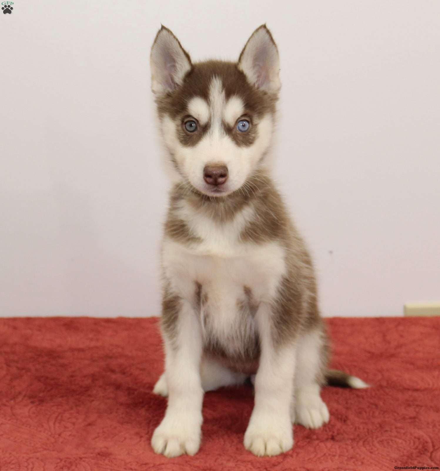 What Makes Siberian Husky Puppies For Sale In Ny So