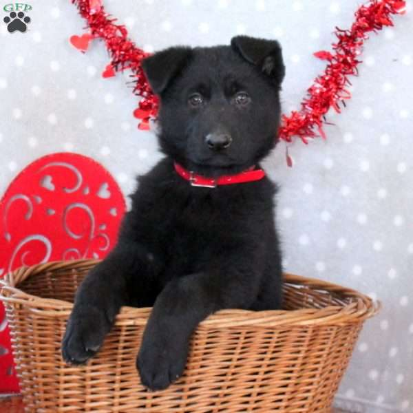 Jaclyn, German Shepherd Puppy