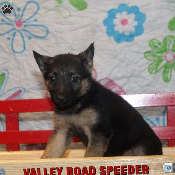 Jana, German Shepherd Puppy