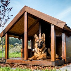 german shepherd in dog house