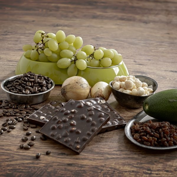 grapes, chocolate, pile of harmful foods to keep away from your dog