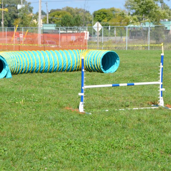 tunnel and jump in diy obstacle course for dog