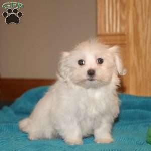 a Maltese puppy named Issac