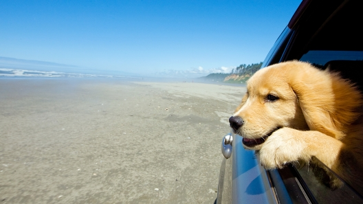 California Dog-Friendly Travel Guide