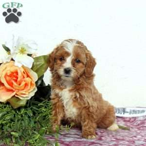 Ship From Gfp Shipping Puppies Greenfield Puppies