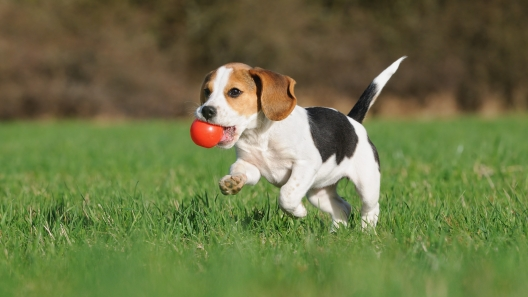 6 Activities Perfect for Puppies