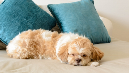 3 Signs a Dog is Perfect for Apartment Living