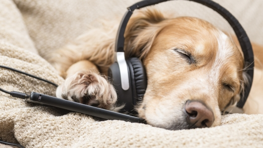 9 Dog Songs to Add to Your Summer Playlist