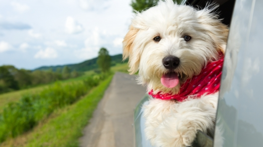 Florida Dog-Friendly Travel Guide