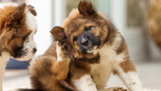 5 Signs Your Dog Might Have Fleas