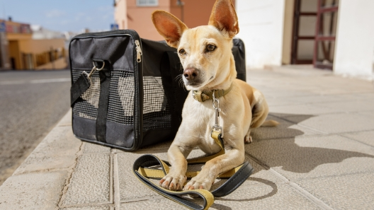 6 Tips for Flying with a Dog