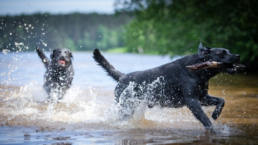 6 Dog Breeds That Tend to Love Water