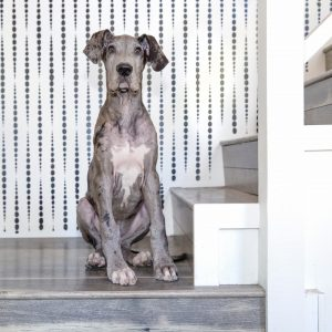 great dane puppy sitting by a staircase