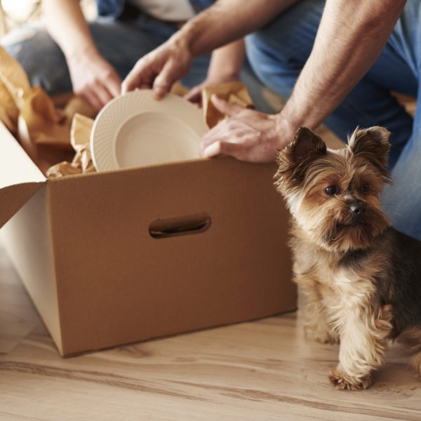 yorkshire terrier sitting next to a moving box