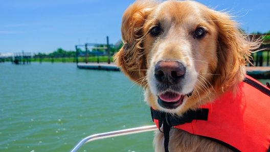 Outdoor Adventure Products for Dogs