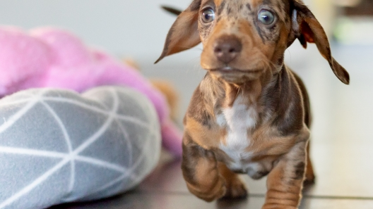 4 Common Mistakes People Make When Bringing a New Dog Home