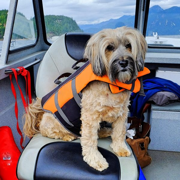 dog in a lifejacket sitting on a boat