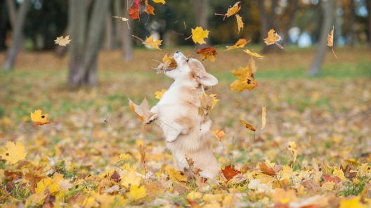 5 Useful Fall Dog Products