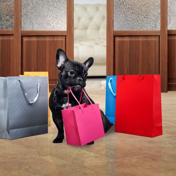 french bulldog surrounded by shopping bags
