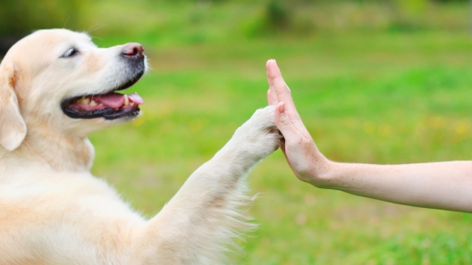 4 Ways Dogs Can Improve Our Health