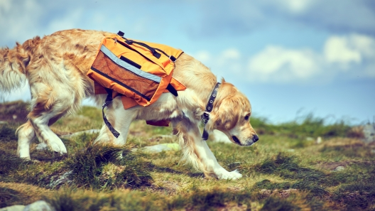 Do's and Don'ts of Dog Backpacks