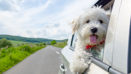 Illinois Dog-Friendly Travel Guide