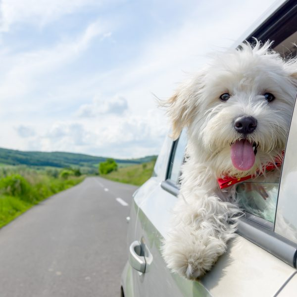 Illinois Dog-Friendly Travel Guide | Greenfield Puppies
