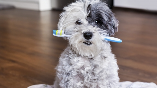 Guide to Dental Care for Dogs