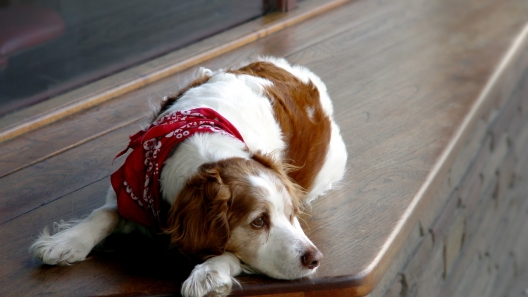 What to do When Your Dog Has Separation Anxiety