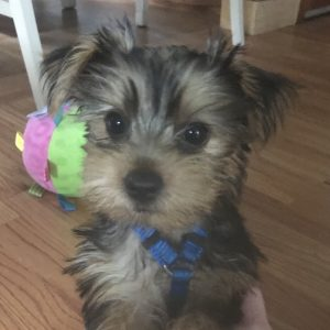 Reviews & Testimonials   Puppy Pictures & Stories