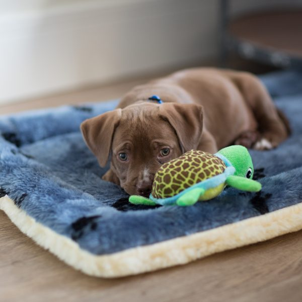 brown puppy lying on a dog bed with a toy