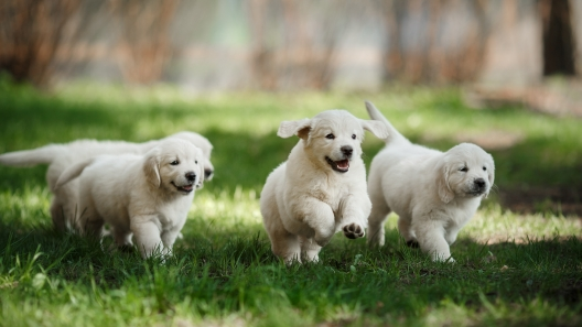 3 Things to Look for When Buying a Puppy