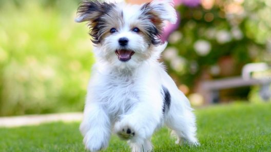 5 Best Ways to Make Your Dog Happy