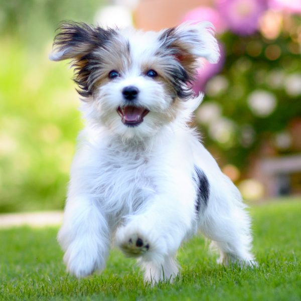 happy puppy playing in the grass