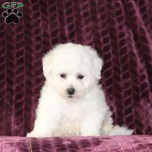 Ship from GFP | Shipping Puppies | Greenfield Puppies